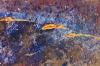Poussiere d\'étoile 3  - 15x10-m