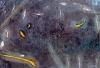 Poussiere d\'étoile 8  - 15x10cm