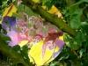 Mobile Fleur 1
