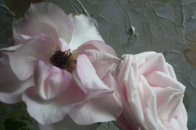 10_Belle_Rose