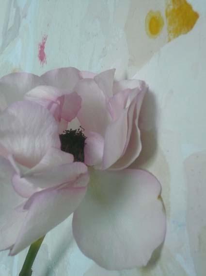 9_Belle_Rose
