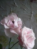 8_Belle_Rose